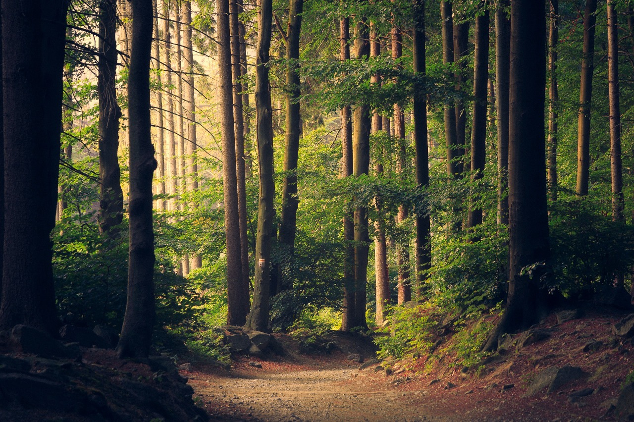 woods-945405_1280